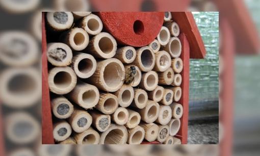Bouw een bijenhotel